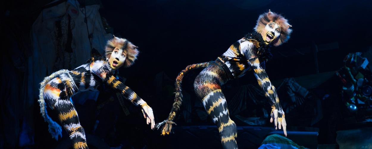 Vandaag zal het 25.000ste kaartje voor Cats in Antwerpen worden verkocht