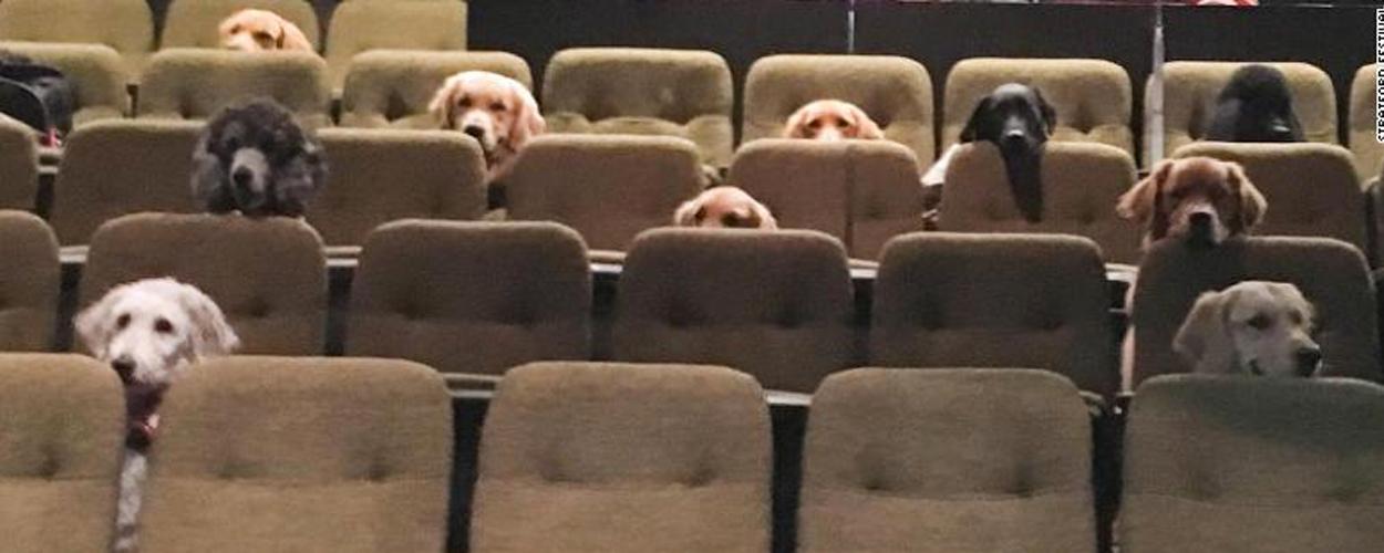 Honden kijken musical Billy Elliot als training